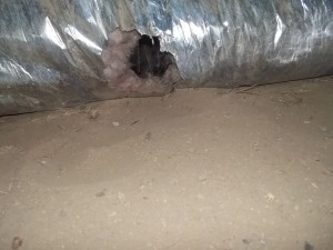 HVAC air supply duct work